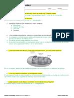 04_evaluacion_prueba_evaluacion_b.docx