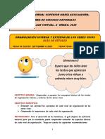 GUÍA  DE LA ORGANIZACIÓN DE LOS SERES VIVOS. 8-09-2020. 4° GRADO.