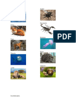 5 ANIMALES VERTEBRADOS E 5 INVERTEBRADOS
