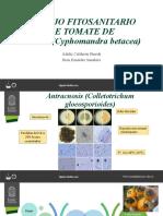 MANEJO FITOSANITARIO DE TOMATE DE ÁRBOL(Cyphomandra betacea)
