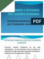 ORGANOS Y SISTEMAS DEL CUERPO HUMANO