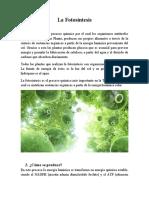 La Fotosíntesis Biología