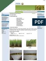 Agriculture __ Crop Production __ Sugarcane