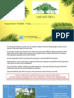 Fodder Trees.pdf