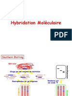 Cours_07_Hybridation_ moléculaire.pptx