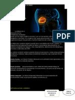 FUNCIONES Y DISFUNCIONES DEL CEREBRO