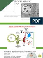 RETICULO ENDOPLASMICO RUGOSO Y  LISO (1).pdf