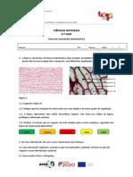 Ficha de avaliação diagnóstica 9º ano