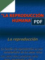 reproduccion-Humana