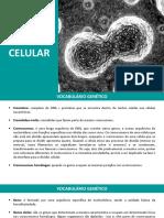 aula04_divisão celular.pdf