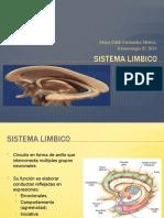 sistema limbico 5