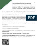 ANATOMÍA FUNCIONAL DE LAS CÉLULAS PROCARIÓTICAS Y EUCARIÓTICAS