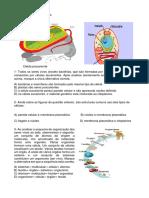 2ª ATIVIDADE ACARÁ- 6º pdf