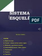 Sistema esquelético