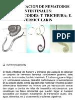 1. practica de parasitologia nematodes..pptx