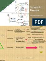 Trabajo de Biologia [Autoguardado]
