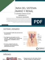 ANATOMIA DEL SISTEMA URINARIO Y RENAL.pdf