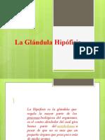 presentacion 9 SISTEMA ENDOCRINO.pptx