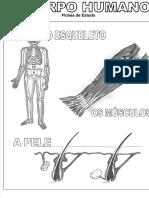 fichas-estudo-corpohumano.pdf