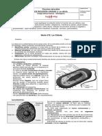 Guía nº3 La célula