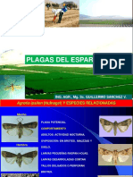 9.- PLAGAS DEL ESPARRAGO-2020-1