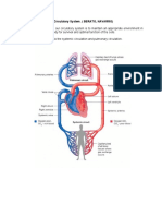 Physiology of the Circulatory System.docx