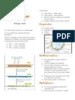 Nucleo interfásico resumo pdf