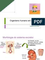 Sistema excretor PP.pptx