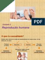 PowerPoint Reprodução II