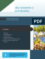 Variedades resistentes a plagas en Colombia Lorena Lozano - Daniel Tenorio