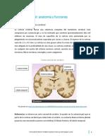 0. Corteza cerebral