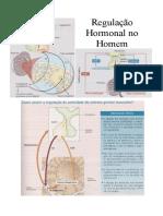 6-reg_hormonal_masculina.pdf