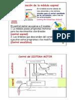 CLASE.Reflejos.control_motor1