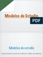 Modelos de estudio