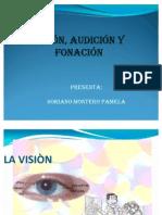 vision(GERIATRIA)