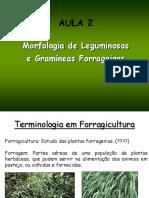 aula geralzona morfologia- 2