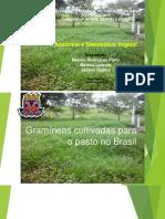 Gramíneas cultivadas -3.pdf