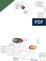 MAPA DE CLINICA (2).docx