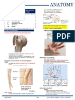 M. 18 Upper Limb Clinical Correlations (Dr-Laygo)[10-26-18]