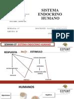Formato de diapositivas - SESION 7 B