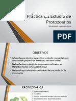 Cultivo protozoarios.pptx