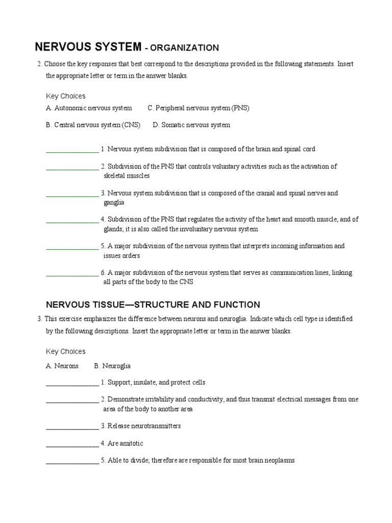 A&P Coloring Nervous Worksheet pdf | Nervous System | Autonomic ...