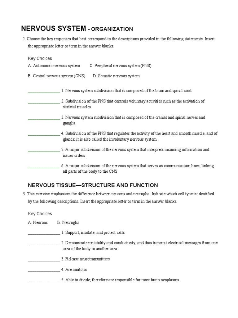 A P Coloring Nervous Worksheet Pdf