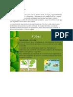 La Fotosíntesis y sus Fases.docx