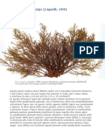 scheda-cystoseira-brachycarpa.pdf
