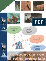 1° Reino Animalia Reproducción  PPT