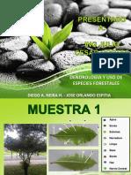 TRABAJO 3. DENDROLOGIA Y USO DE ESPECIES FORESTALES.pdf