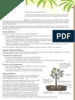 Palmeiras.pdf