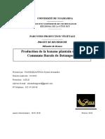 protocole 1 banane plantain