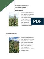 VARIEDADES DE QUINUA PUNO